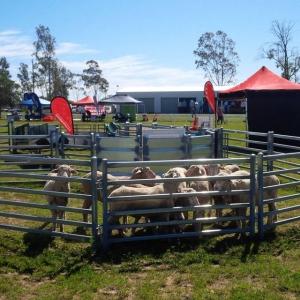 Galvanized Oval Rail Sheep Yards Panels