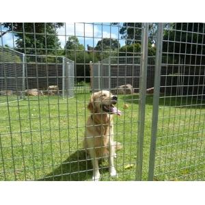 Temporary dog fence