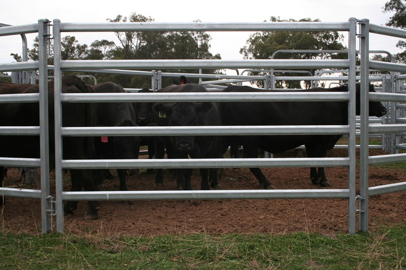 Cattle Yard Panel