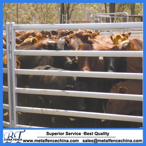 30x60mm 6 bar oval tube Cattle panel